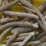 The Benefits of Ayurvedic Medicine: Ashwagandha