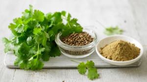 coriander fresh seeds powder