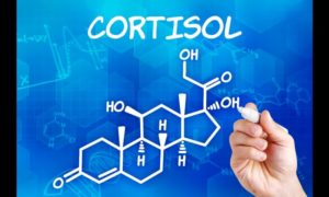 Cortisol: The True Cause of Heart Disease?_cortisol diagram