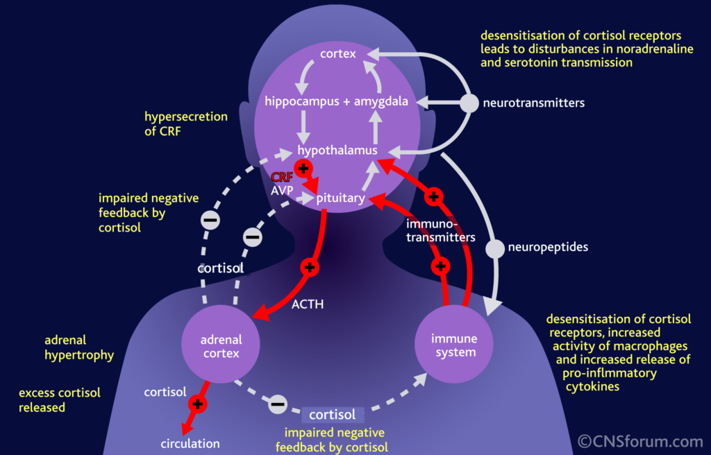 Cortisol: The True Cause of Heart Disease?_cortisol wreaks havoc