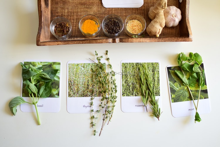 Herbs 101: How to Select and Use Herbs Safely_herbs