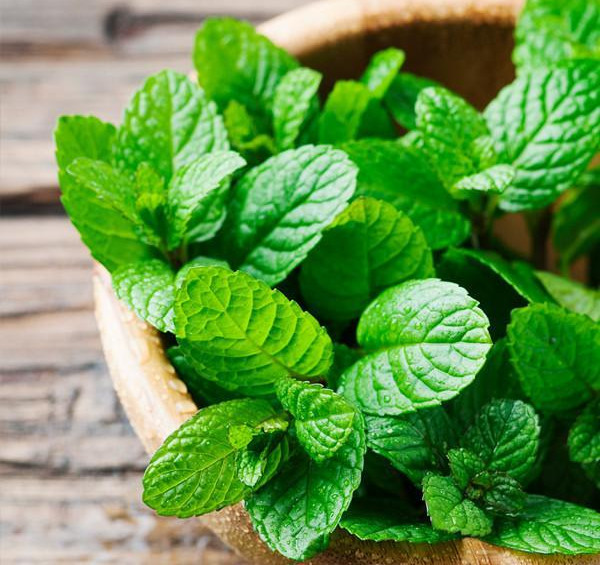 The Benefits of Peppermint_peppermint in wood bowl